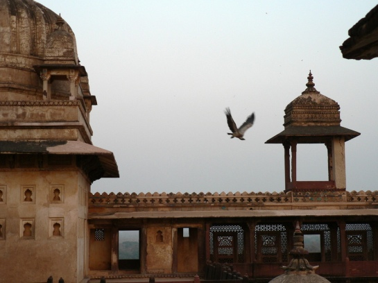 Vultures in Orchha